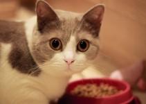 Kucing Tidak Mau Makan?