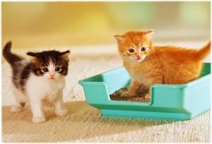 Gambar Anak Kucing Lucu Ingin Buang Air