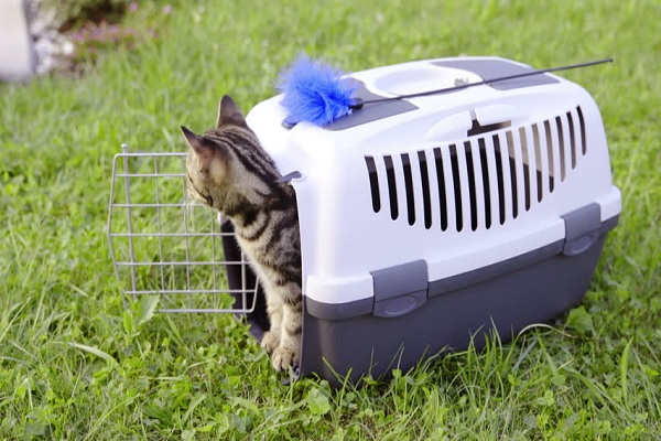 Melatih Kucing Buang Air Dengan Litter Box Tertutup