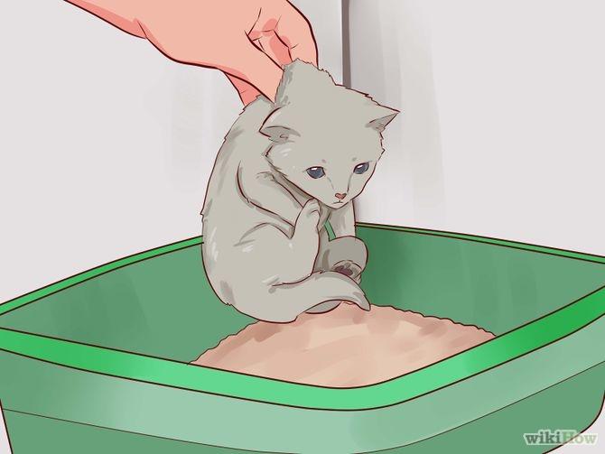 Menaruh Anak Kucing ke Litter Box