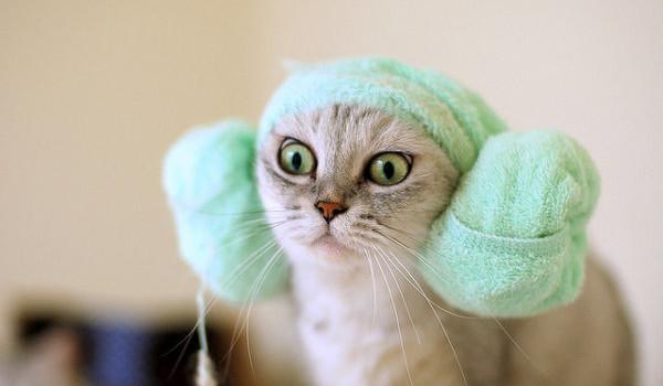 Gambar Kucing Lucu Memakai Handuk