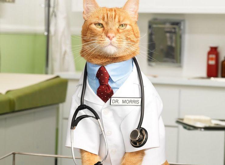 Gambar Cara Mengobati Kucing Mencret