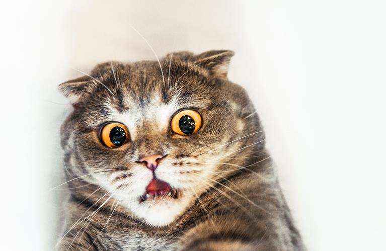Bahaya Bulu Kucing Bagi Kesehatan Manusia