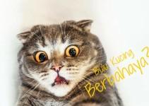 bulu-kucing-berbahaya-bagi-manusia