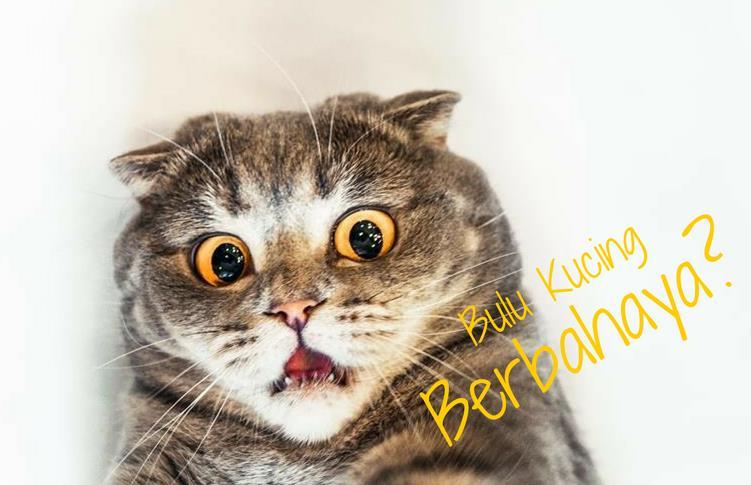 Bahaya Bulu Kucing Bagi Manusia Menurut Dokter Terpercaya ...