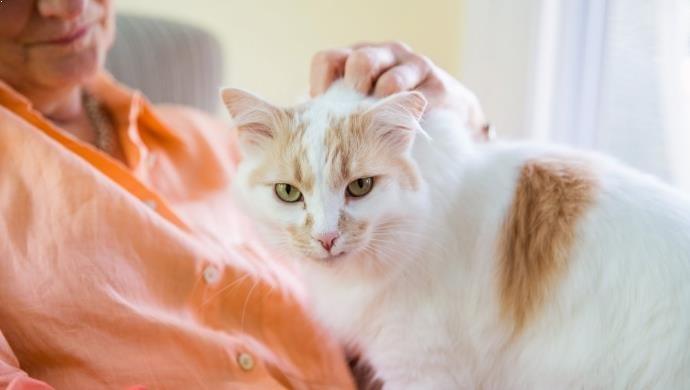Cara Merawat Kucing Supaya Bulunya Tidak Berbahaya