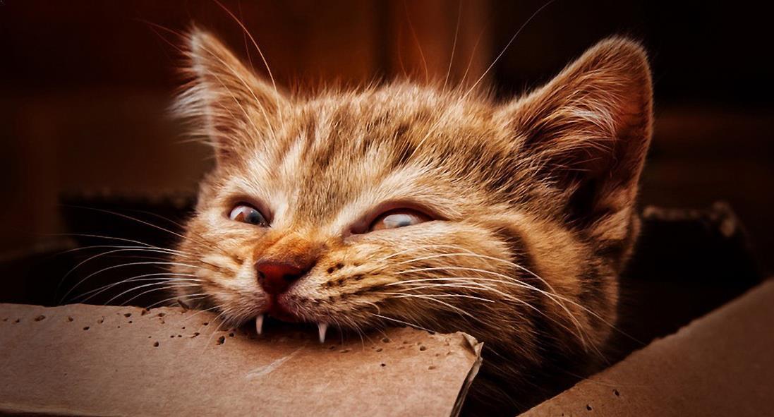 tafsir-mimpi-digigit-kucing