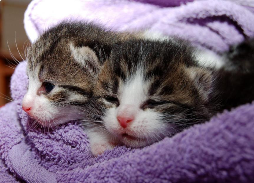 Penyebab Dan Cara Mengobati Kucing Flu Pilek Yang