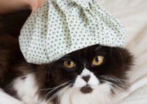 foto-apa-penyebab-kucing-sakit-flu