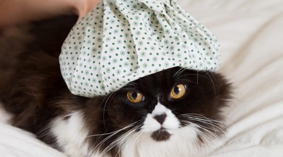 Foto Apa Penyebab Kucing Flu?