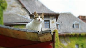 cara mengusir kucing di atap rumah