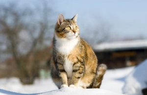 Ciri-ciri Kucing Hamil Apa aja ya