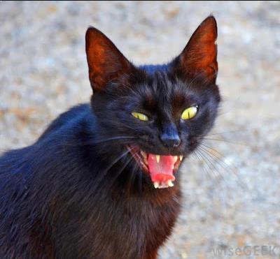 Gambar Cara Mengusir Kucing Liar