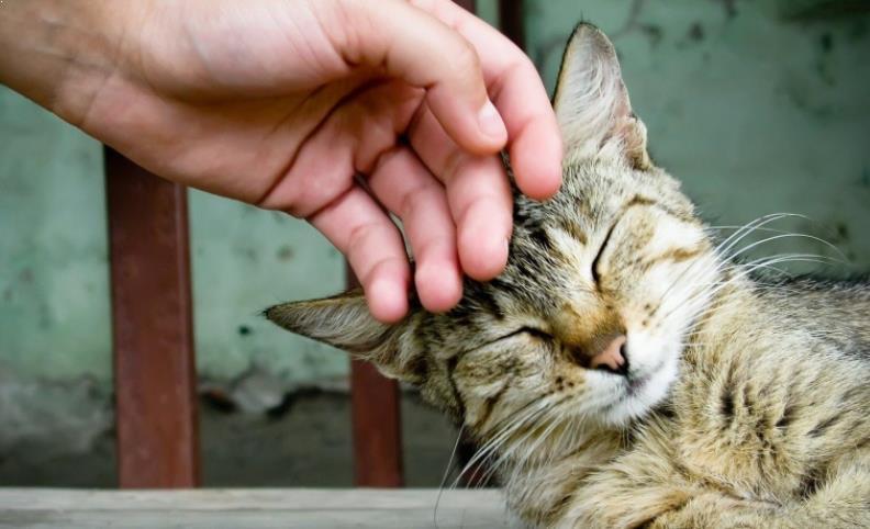 Foto Mengusap-usap Kepala Kucing