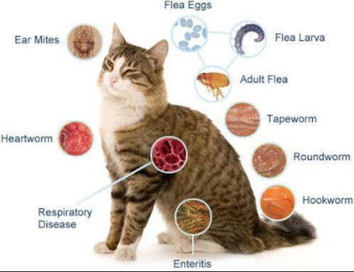 Jenis Cacing Penyebab Kucing Cacingan