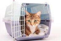 Daftar Harga Kandang Kucing