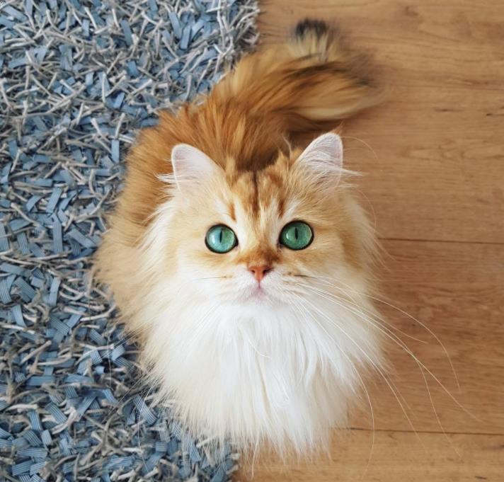Gambar Kucing Mixdom godean.web.id