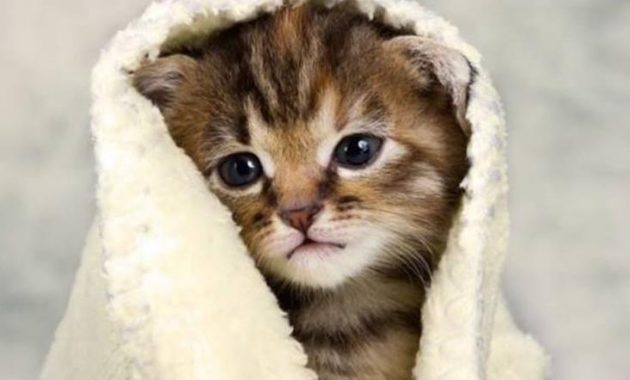 Penyebab dan 8 Cara Mengobati Kucing Demam Ampuh