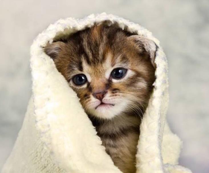 Cara Mengobati Kucing yang Demam