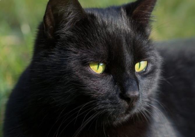 Kucing Hitam Gak Nyeremin Kok