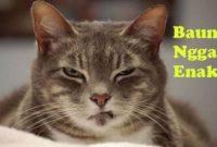 Bau Apa Saja yang Tidak Disukai Kucing