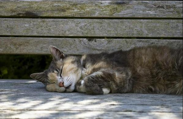 Gambar Kucing Lemas Keracunan