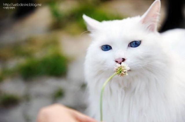 Yaro suka makan bunga?