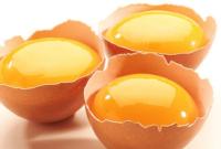 gambar kuning telur untuk kucing