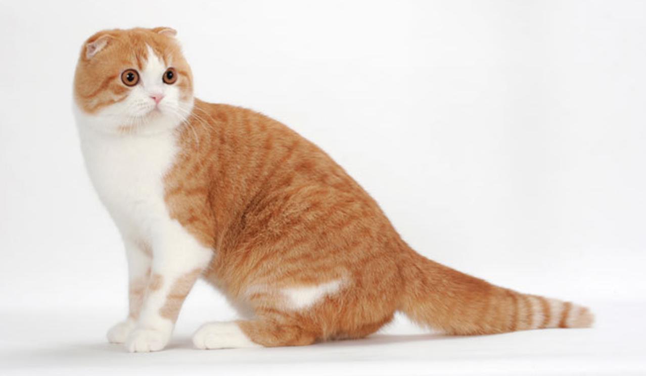 Unduh 98+  Gambar Kucing Gampang Paling Lucu HD