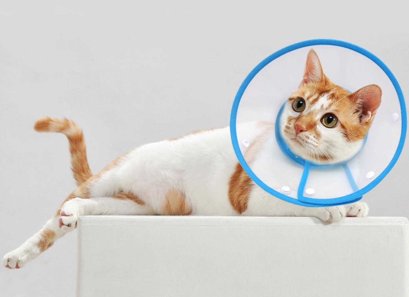 Gambar Kalung Anti Kutu Kucing