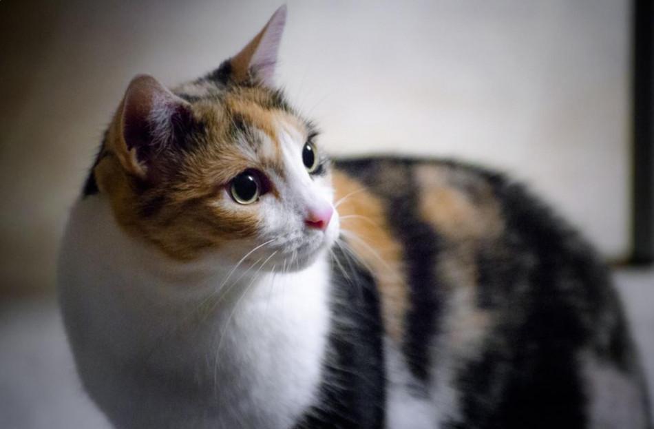 Gambar Kucing Kembang Telon Cantik