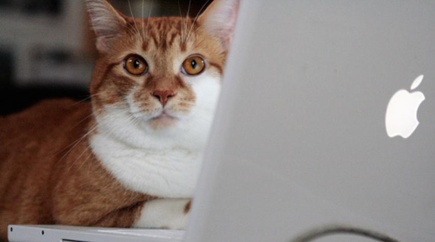Apa saja Perlengkapan Memelihara Kucing anggora?