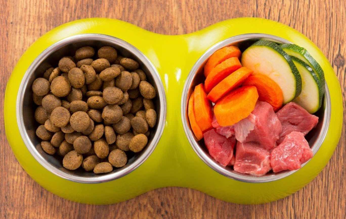 Makanan Kucing Buatan Sendiri