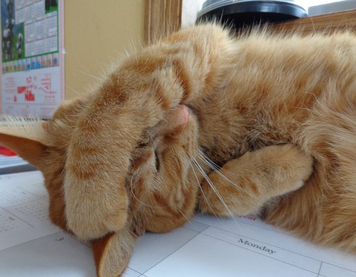 Hindari Kucing dari Stress, via fit-cats.com
