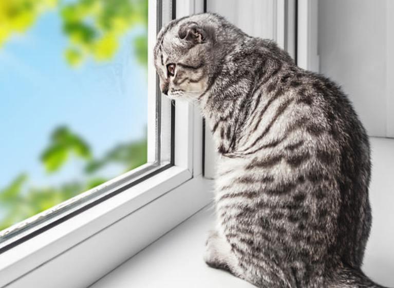 Kucing Suka Menyendiri