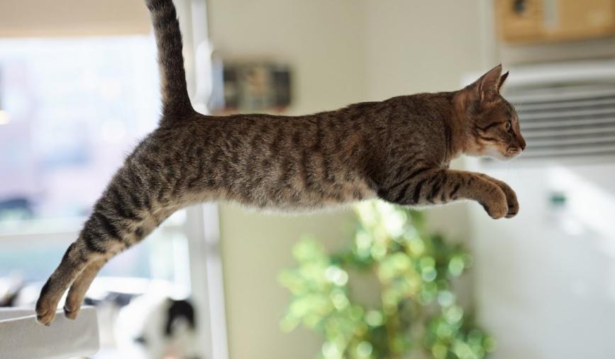 Kucing menjadi Lincah dan Sehat