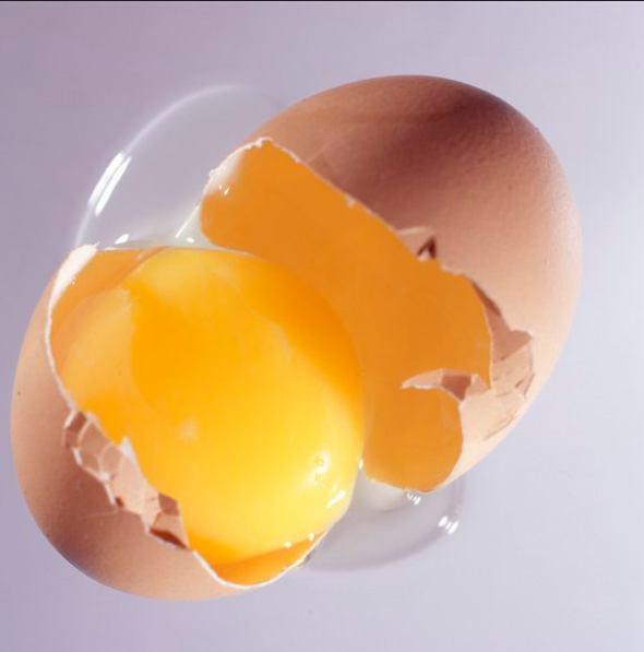 Memberi Kuning Telur untuk Kucing