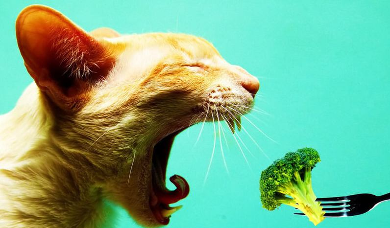 Memberi Makanan Sehat untuk Kucing, via superpetwarehouse.com