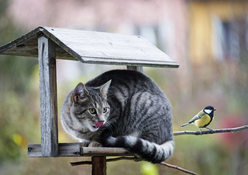 Memperhatikan Lingkungan Kucing, via ondeckby