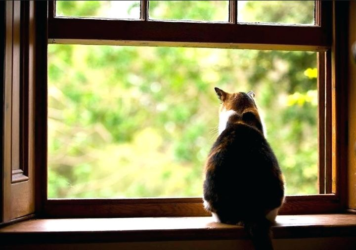 Menarik Diri dan Kelihangan Minat, via aboutchowchowforum.com