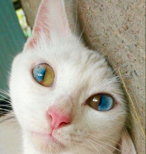 Penglihatan kucing terganggu, via pinterest.com