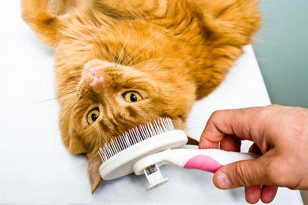 Sering Menyisir Bulu Kucing, via www.aspca.org