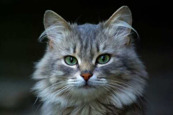 Mitos Menabrak Kucing Tidak Berlaku