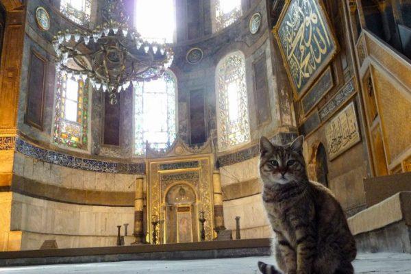 Muezza, Kucing Nabi Muhammad yang Istimewa
