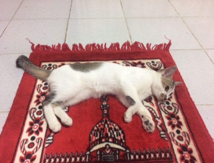 Nama Kucing Dalam Bahasa Arab 81021 Nama Untuk Kucing Comel Lucu Dan Unik