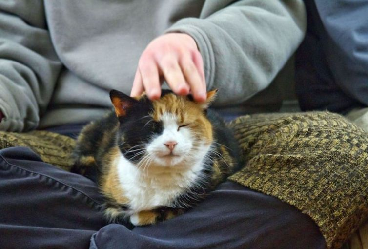 Nama Kucing Nabi Dan Sifat Sifatnya Yang Mulia Lengkap