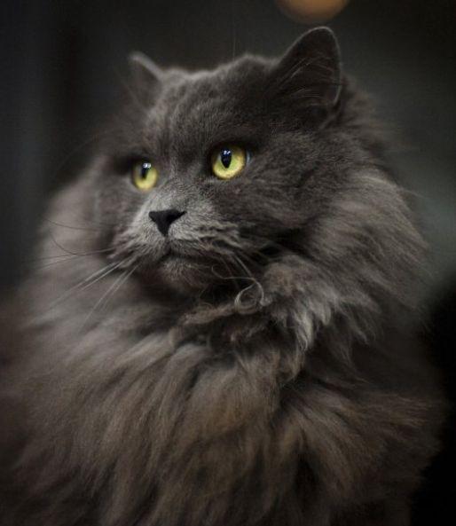 Vitamin Bulu Kucing