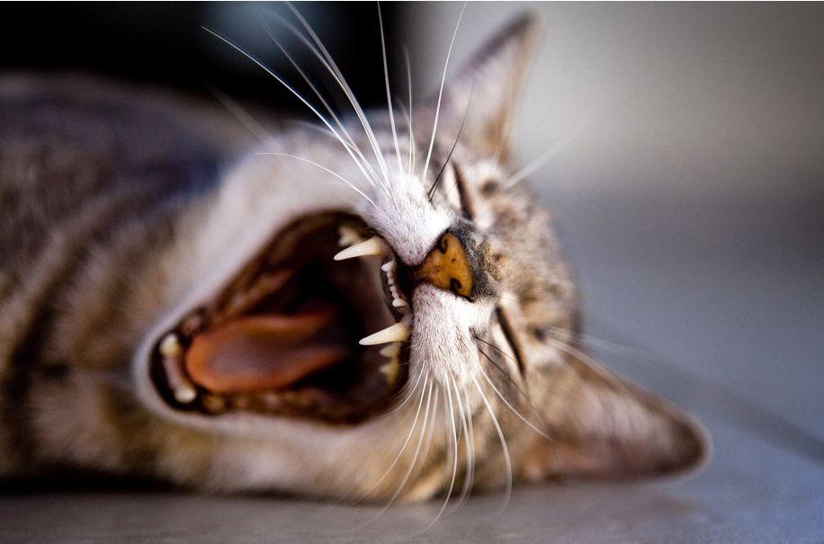 kucing mengeon mungkin tanda dia bosan
