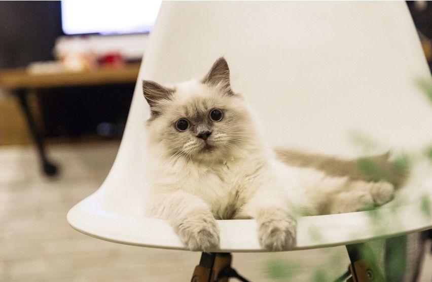lingkungan yang nyaman membuat merawat kucing menjadi mudah