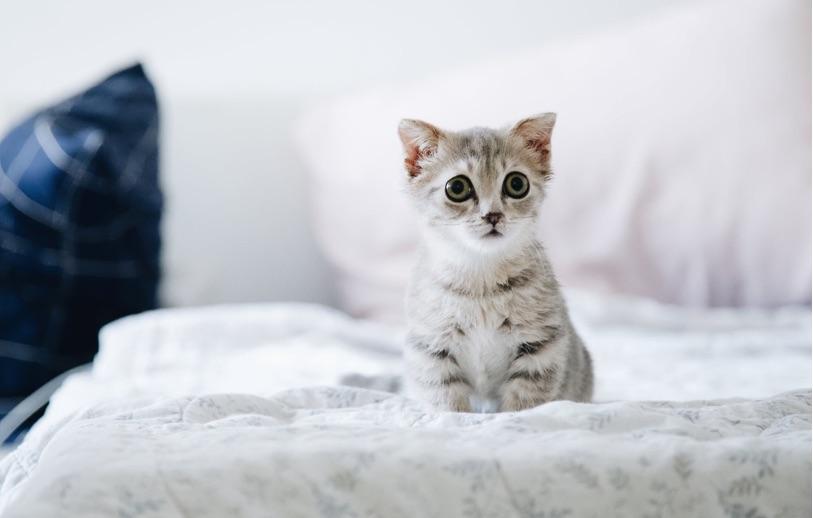 Mecinptakan lingkungan yang aman untuk anak kucing